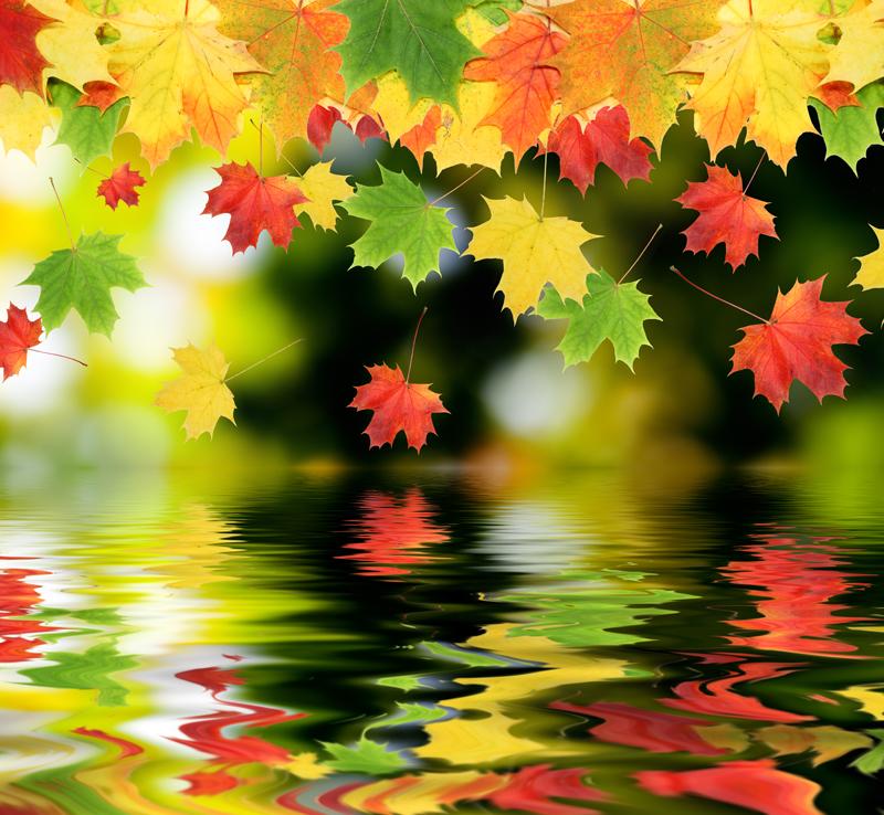 картинка яркая осень